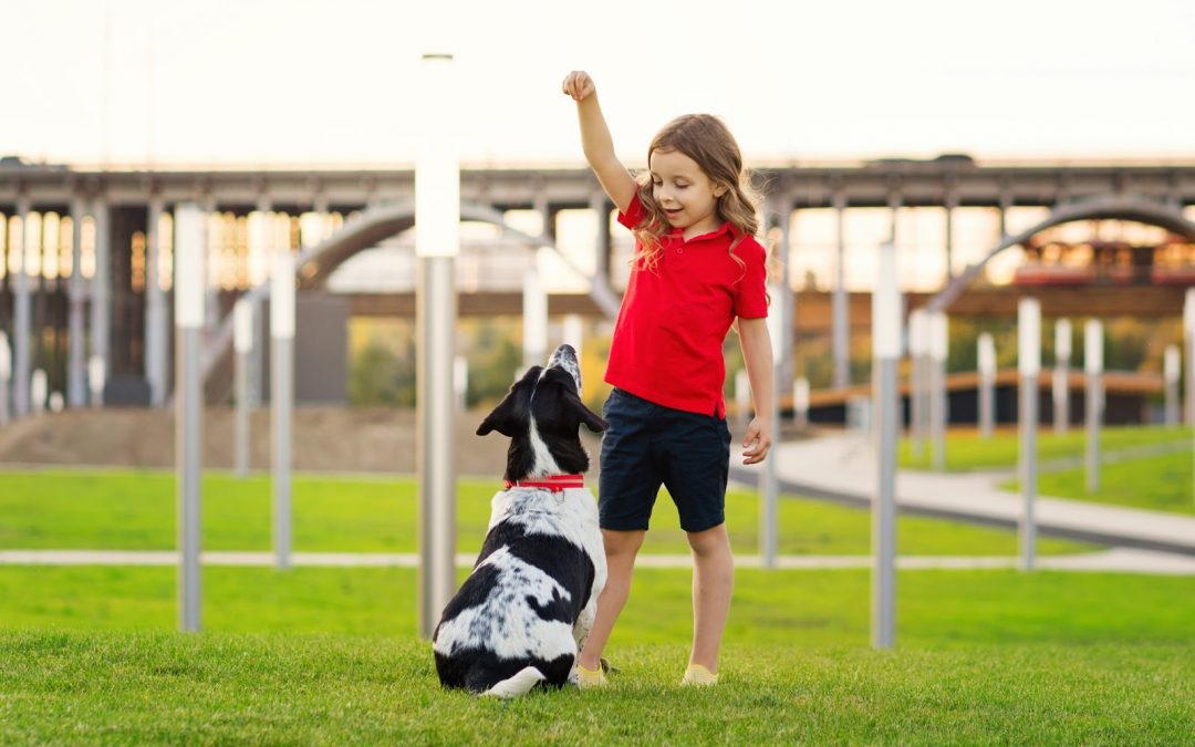 5 Basic Commands To Train Your Dog